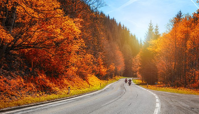 Driving in Autumn